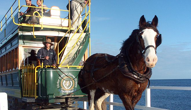 Victor-Harbor-Horse-Drawn-Tram-1